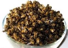 Пчелиный-подмор - применение