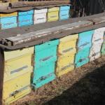 Первый облет пчел