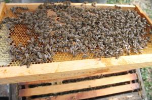 Весенняя ревизия пчел