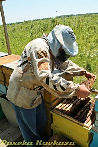 Пчеловод Валерий