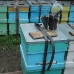 Кочевка пчел