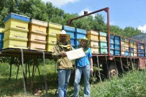 Пчеловоды Александр и Татьяна