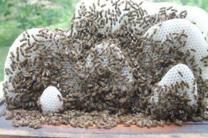 Пирожки пчелиные