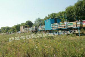 Пасека на Кавказе