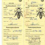 Паспорт маток Бакфаст